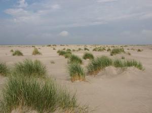 strand met helmgras en ontstaan van duinen