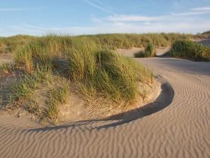 duinen met helmgras en structuren in zand