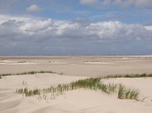 strand met duinvorming op waddeneiland